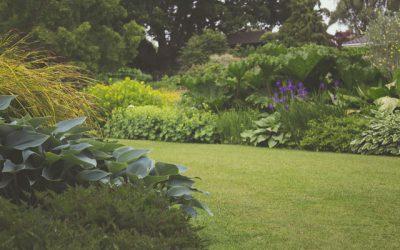 Hoe creëert u meer natuurbeleving in uw tuin?
